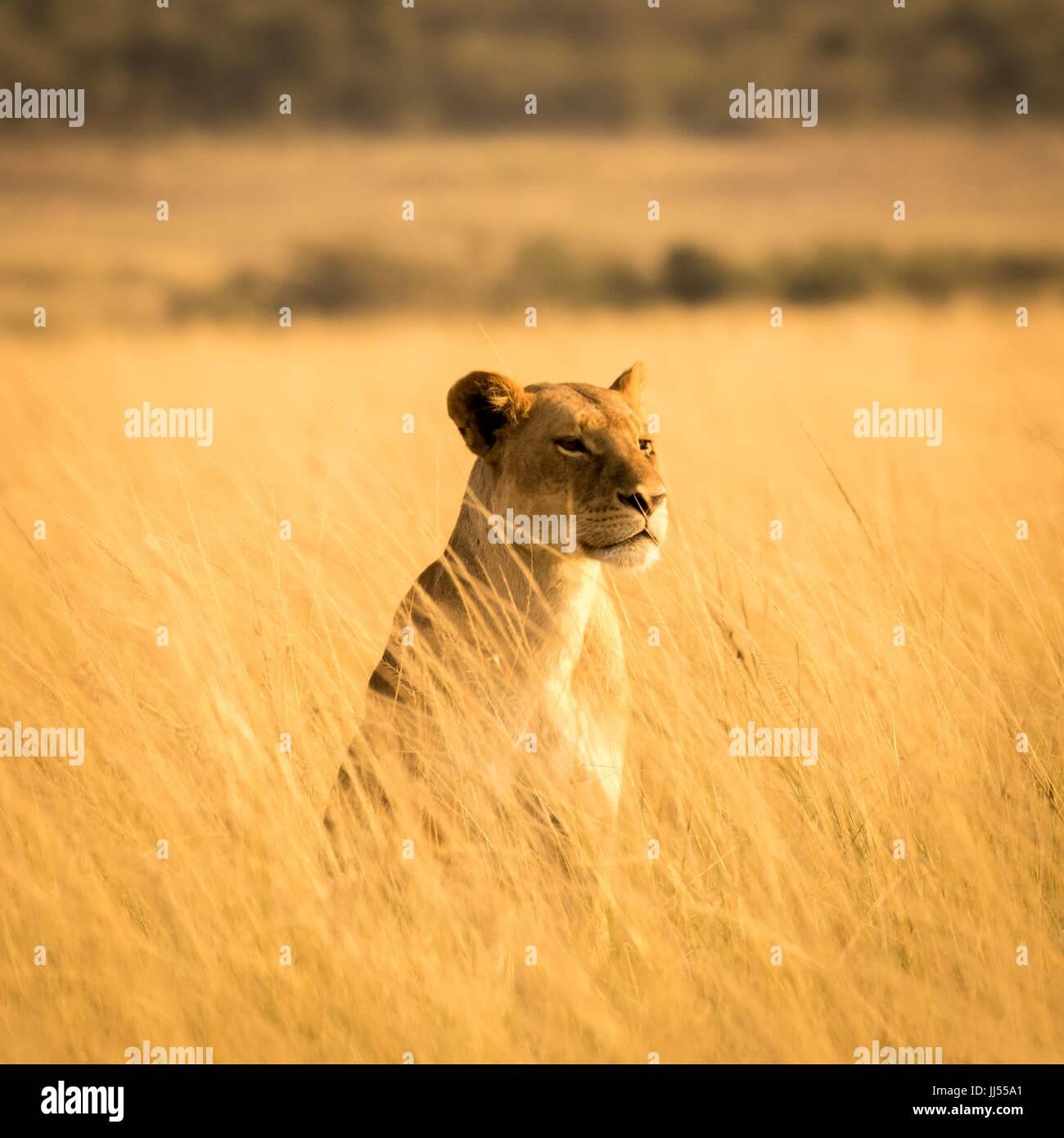 Splendida fauna africana Immagini Stock