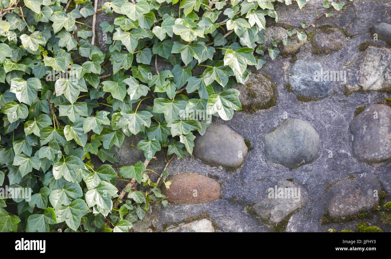 Parete / muralla Immagini Stock