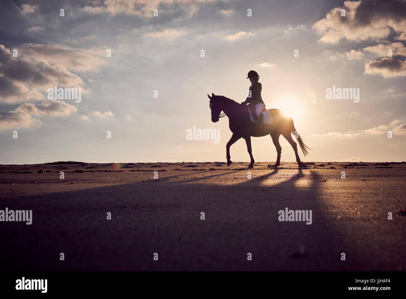 Una giovane donna in sella il suo cavallo sulla spiaggia al tramonto. Immagini Stock