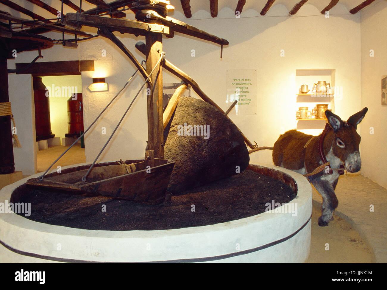 Premere alori. Cultura del museo di olivo, Baeza, Provincia di Jaen, Andalusia. Immagini Stock
