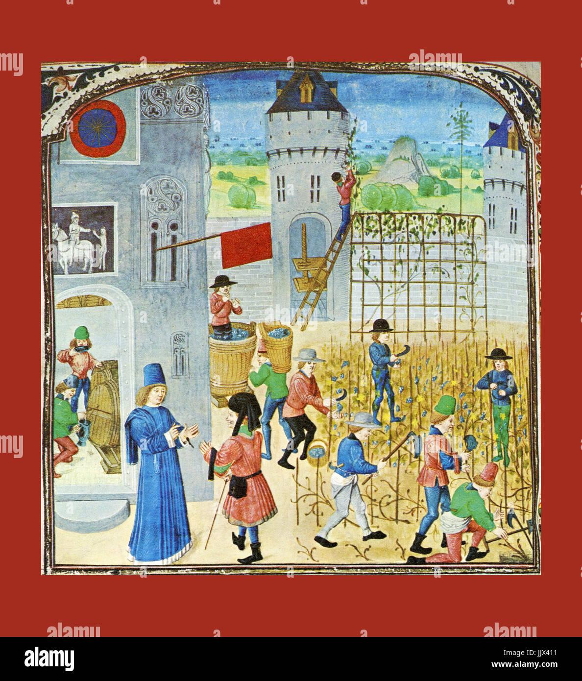 """Storico raccolto di uve e vini di produzione design illuminata nel XV secolo da Pierre de Crescens """" Livre Immagini Stock"""