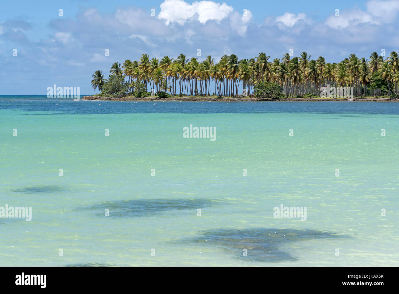 Oceano Atlantico con alberi di noce di cocco nella Repubblica Dominicana Immagini Stock