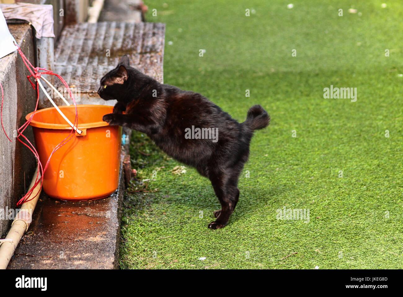 www. grasso nero micio