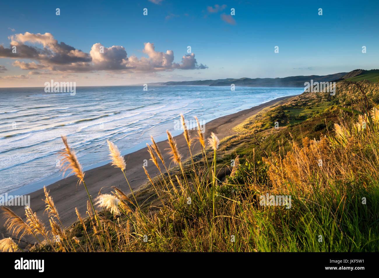 Nuova Zelanda, Isola del nord, raglan, ngarunui beach in serata Immagini Stock