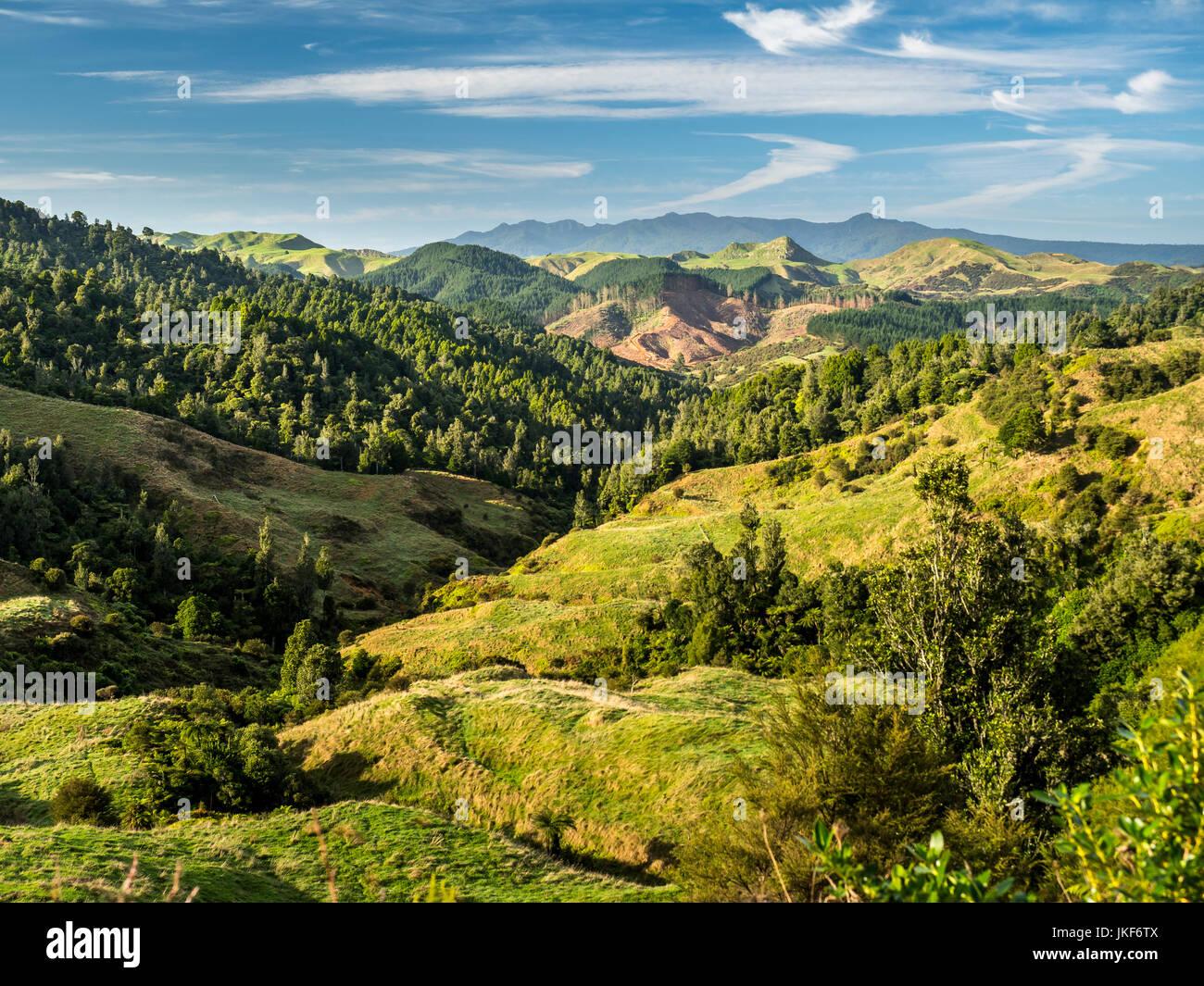 Nuova Zelanda, Isola del nord, regione Waikato, SCENIC Immagini Stock