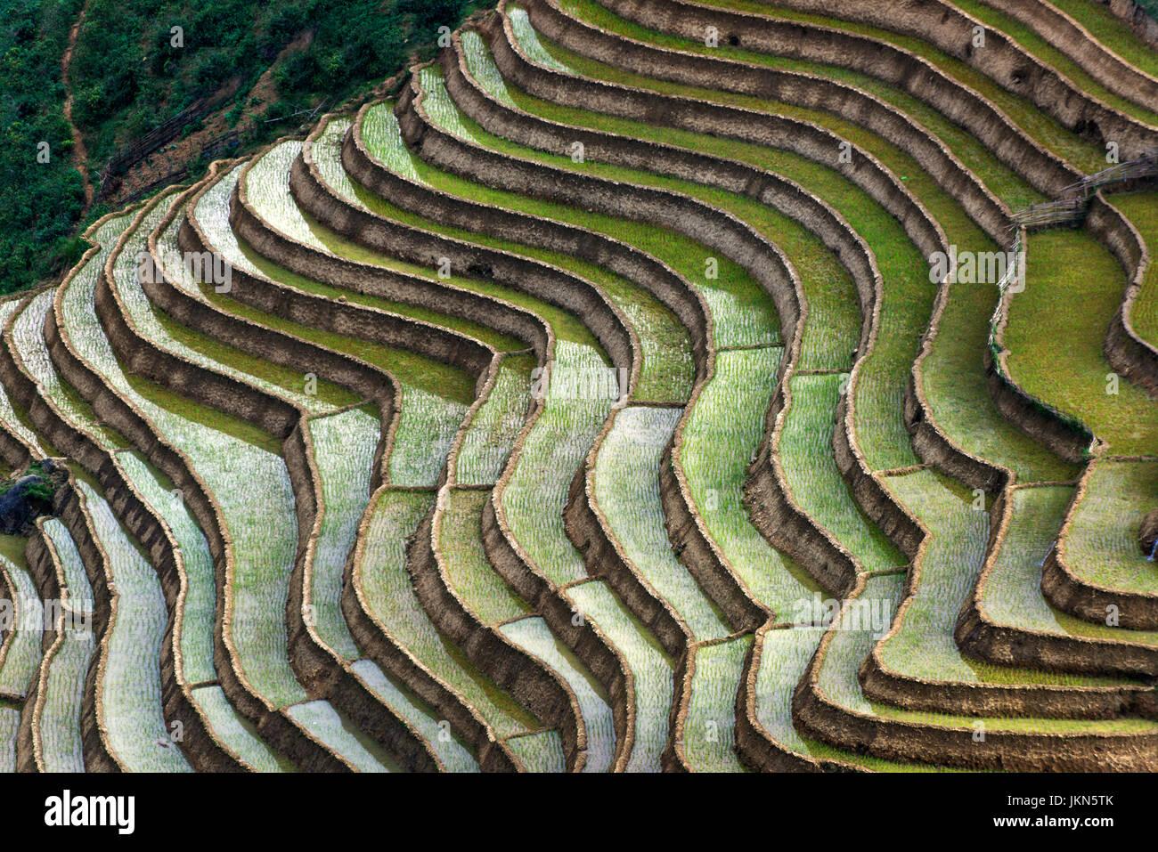 Vista panoramica delle risaie vicino a Sapa, nel Vietnam del nord. Immagini Stock