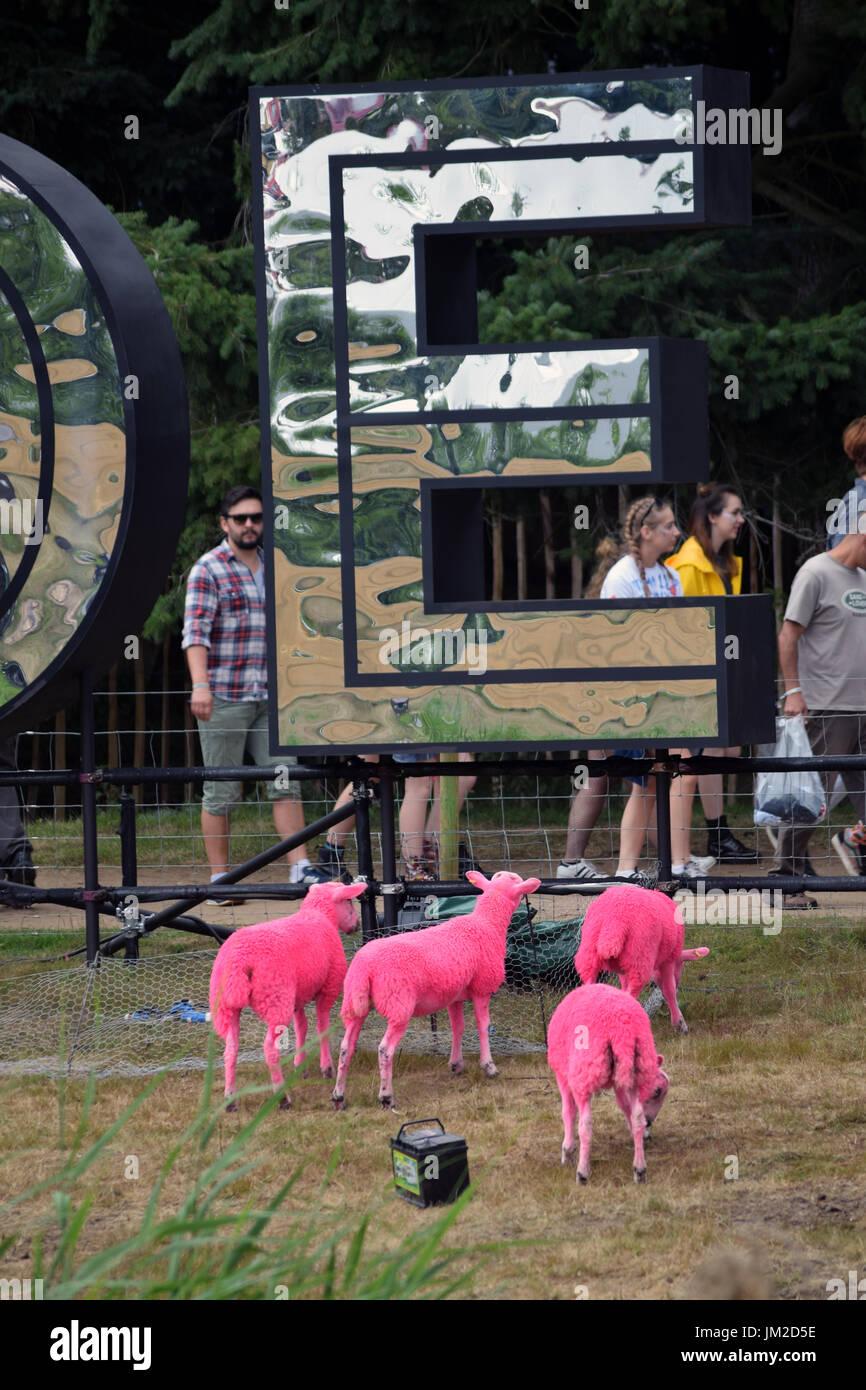 Latitude Festival 2017, Henham Park, Suffolk, Regno Unito. Ogni anno le pecore sono tinte di rosa Immagini Stock