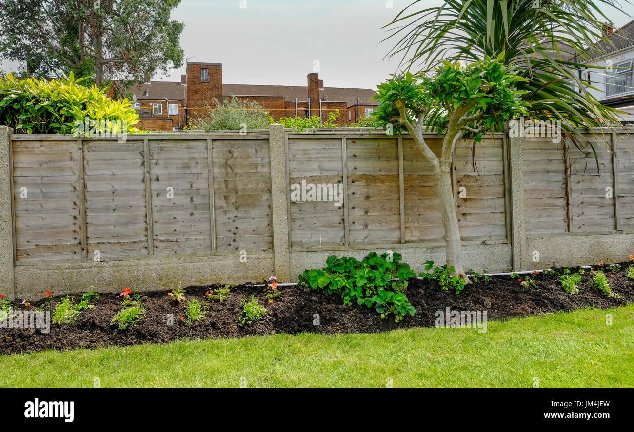 Piante Piccole Da Giardino letto di fiori in retro-giardino con un recinto dietro le