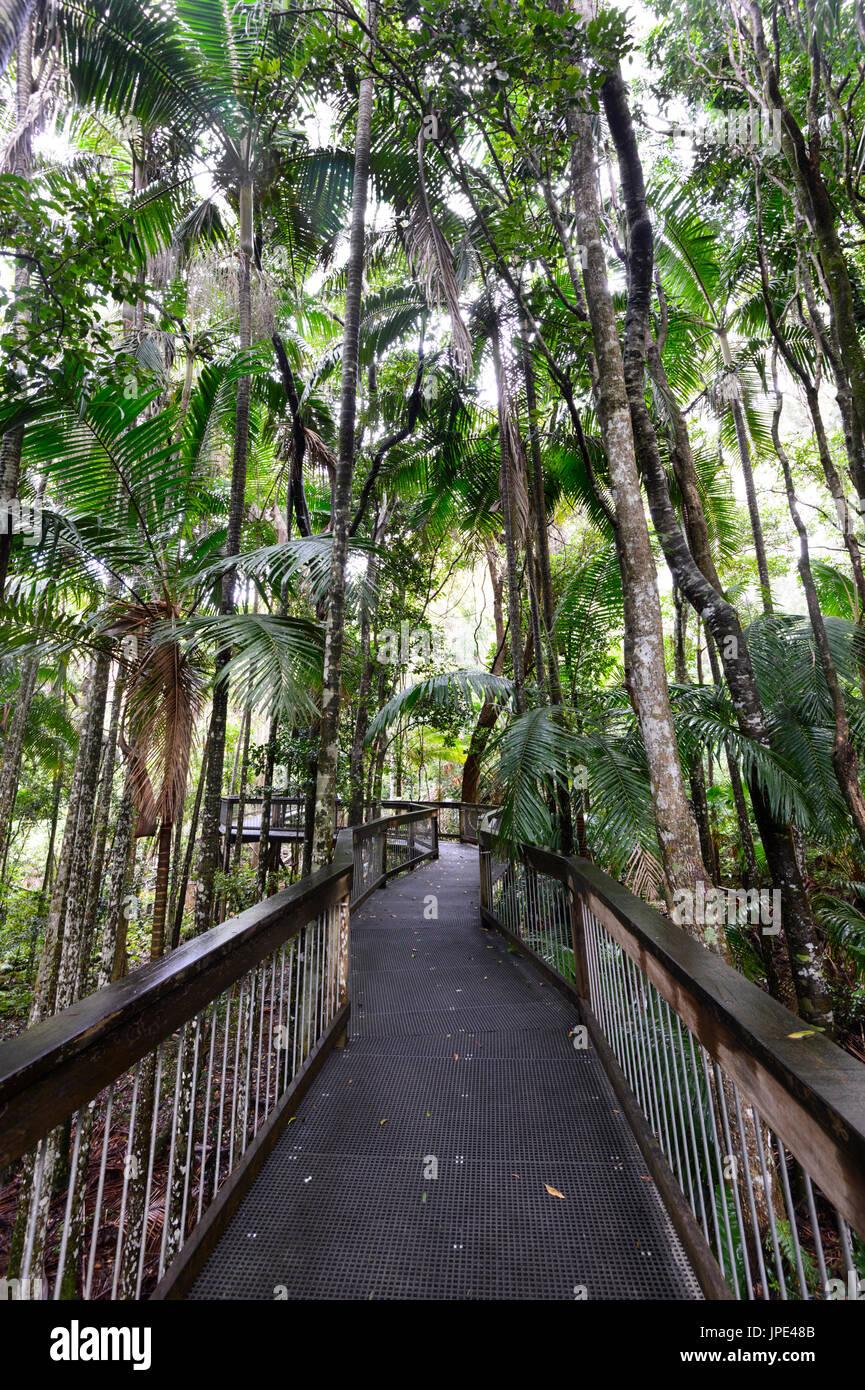 Passeggiata attraverso la foresta in mare acri centro della foresta pluviale, Port Macquarie, Nuovo Galles del Sud, NSW, Australia Immagini Stock
