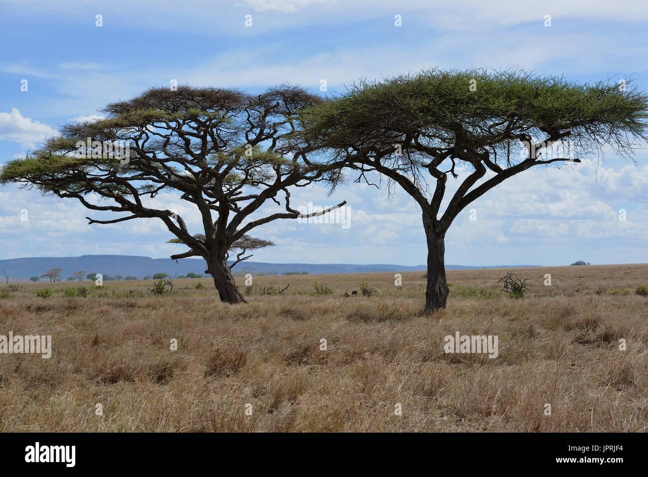 African Safari paesaggio in Tanzania Foto Stock