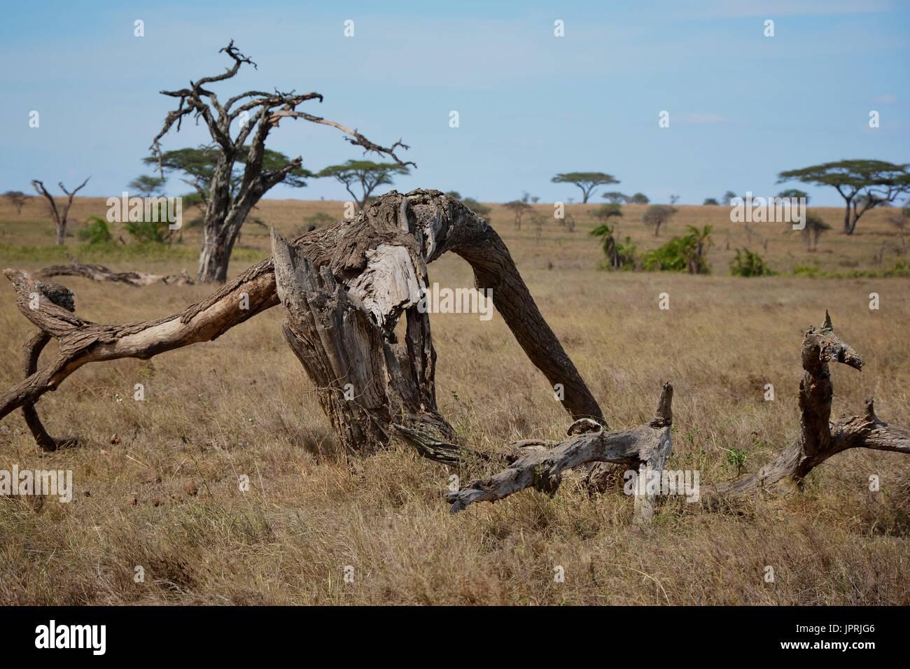 African Safari paesaggio in Tanzania Immagini Stock