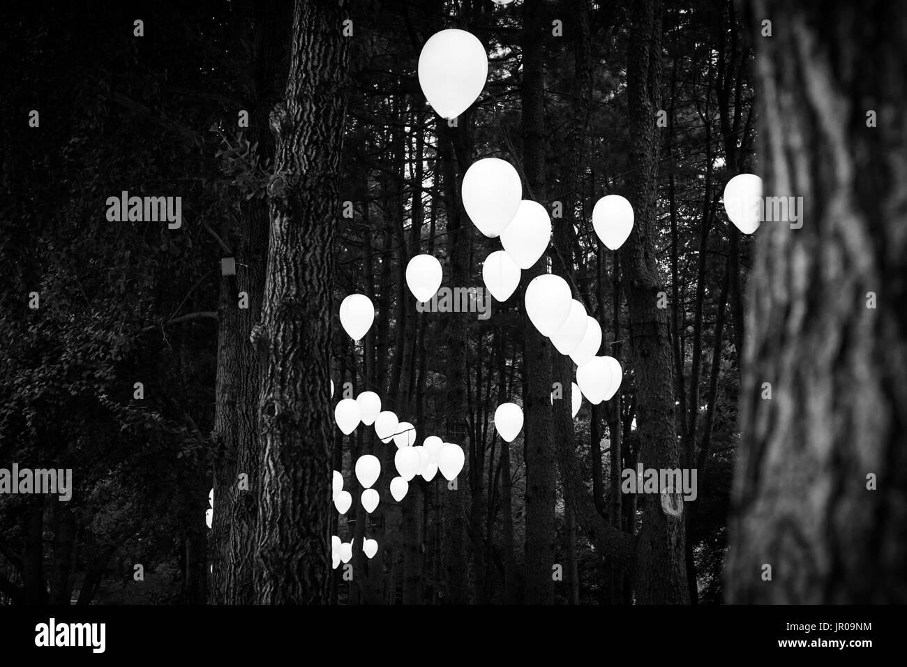 Ornamento di lampada installata tra alberi di pino in Nami Island, Corea del Sud Foto Stock