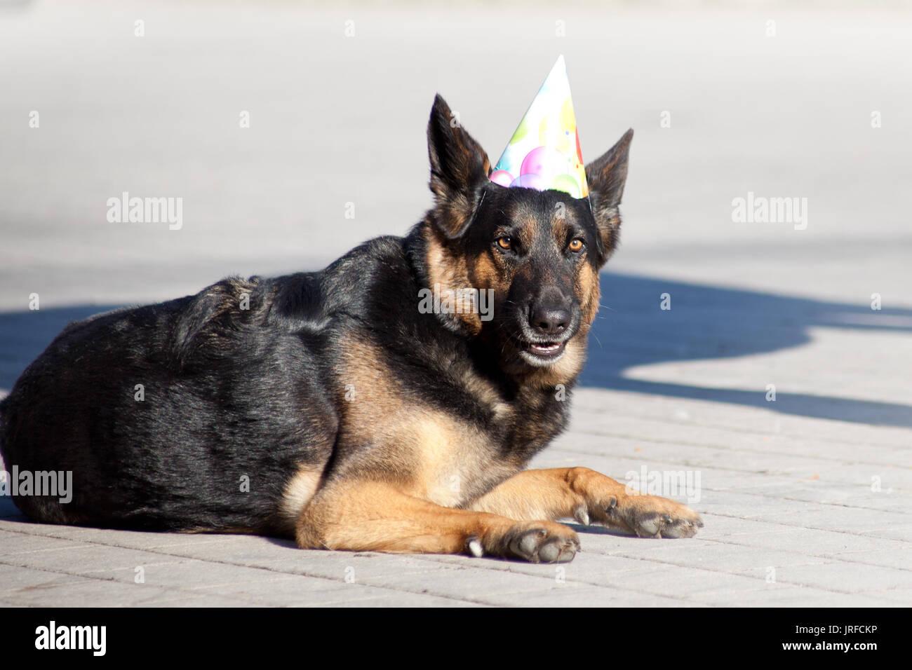 Divertente Festa Cane Con Party Hat Festeggiare Il Compleanno Foto