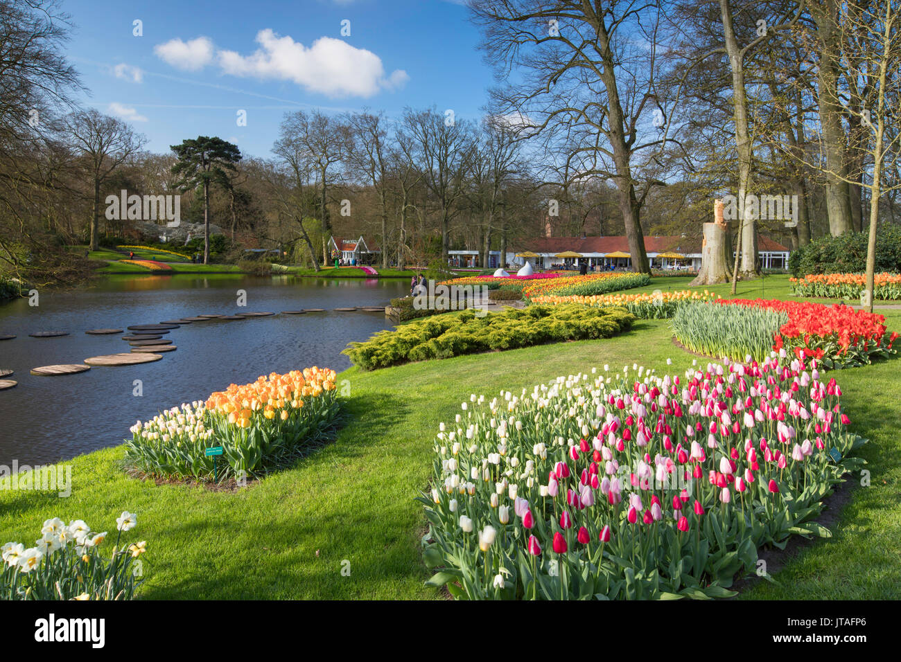 I tulipani in giardini Keukenhof Lisse, Paesi Bassi, Europa Foto Stock