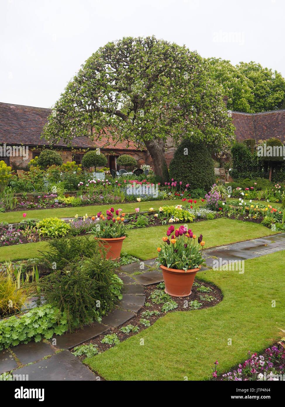 Chenies Manor giardino,Buckinghamshire. Diagonale di visualizzazione verticale del giardino sommerso con melo, sentieri e tulipani sul giorno di pioggia, prati, topiaria da pavimentazione e. Foto Stock