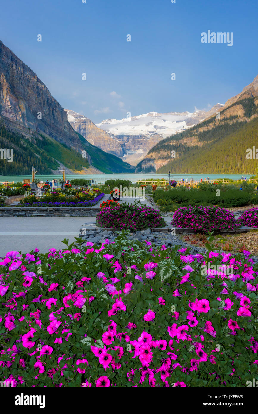 Fiori Da Giardino Roccioso fiori da giardino, lago louise, il parco nazionale di banff