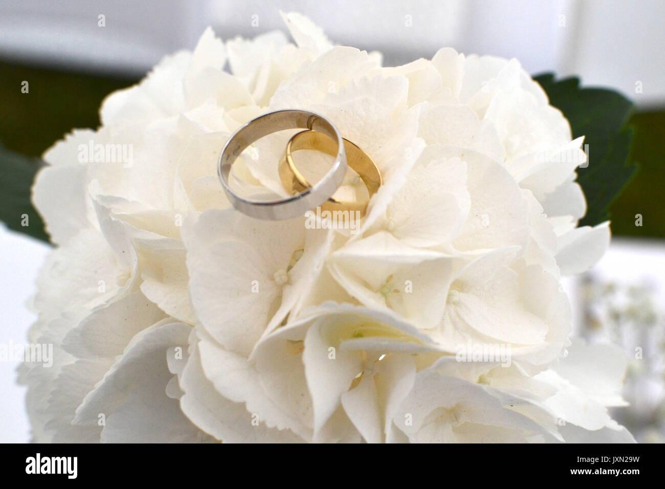 Gli anelli di fidanzamento sul fiore. Immagini Stock