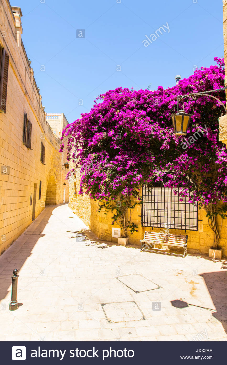 Banco sotto una fioritura viola bouganville in una stradina di Mdina, Malta Immagini Stock