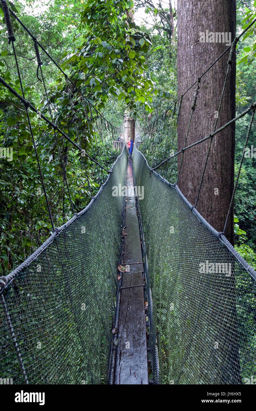 Lunga passerella elevata attraverso le cime degli alberi nella foresta pluviale al Parco Kinabalu, Sabah Borneo Malese. Immagini Stock
