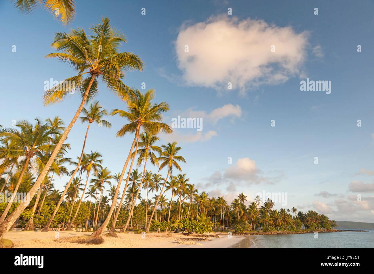 Una spiaggia da sogno con palme di cocco in Repubblica Dominicana Immagini Stock