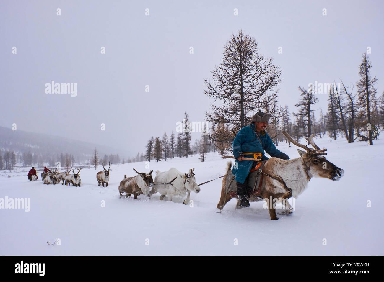 Mongolia, Khovsgol provincia, Tsaatan, renne herder, migrazione invernale, la transumanza Immagini Stock