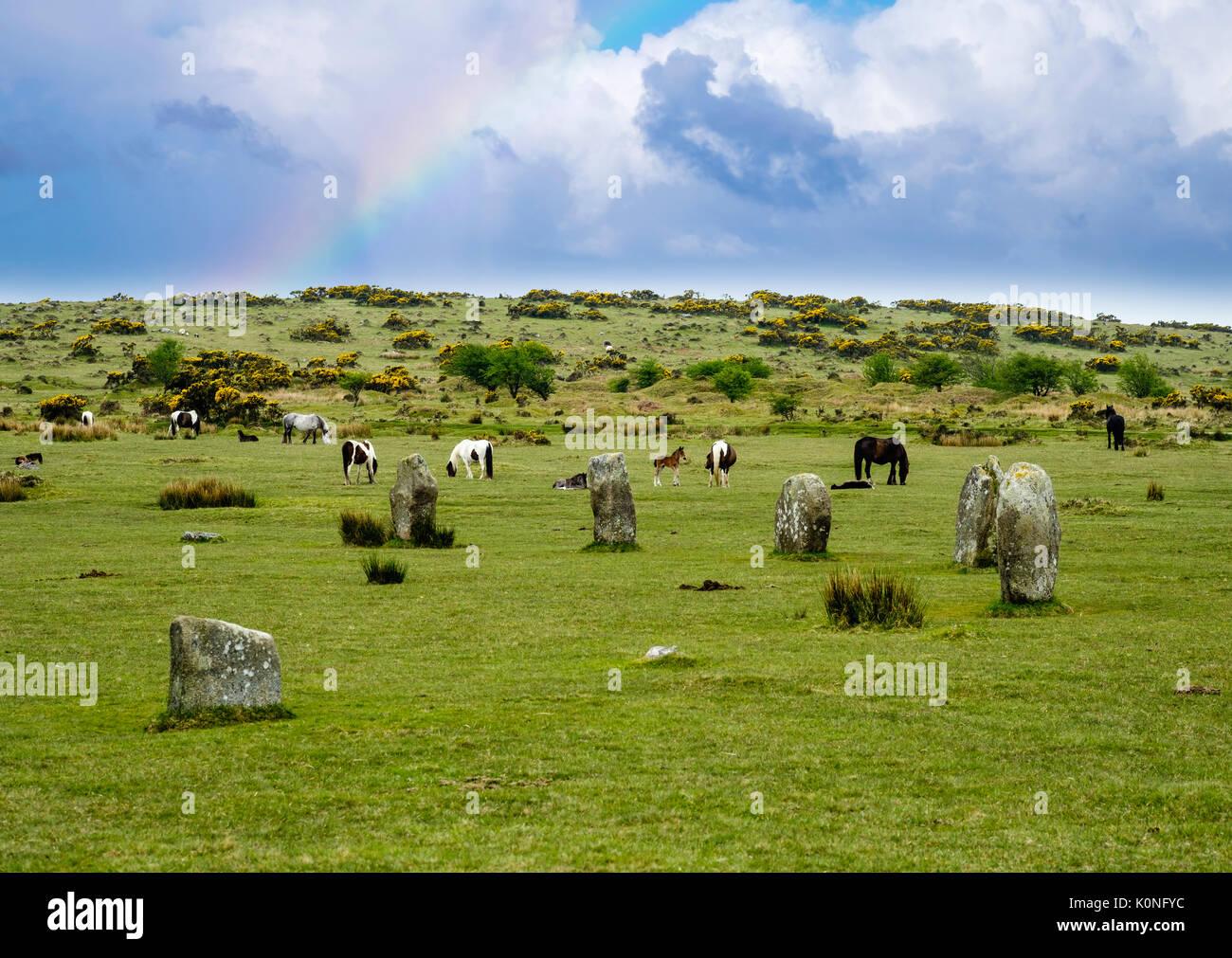 Megalithen, Steinkreis Il Hurlers Bronzezeit aus, pony, Bodmin Moor, Cornwall, Inghilterra, Großbritannien Foto Stock
