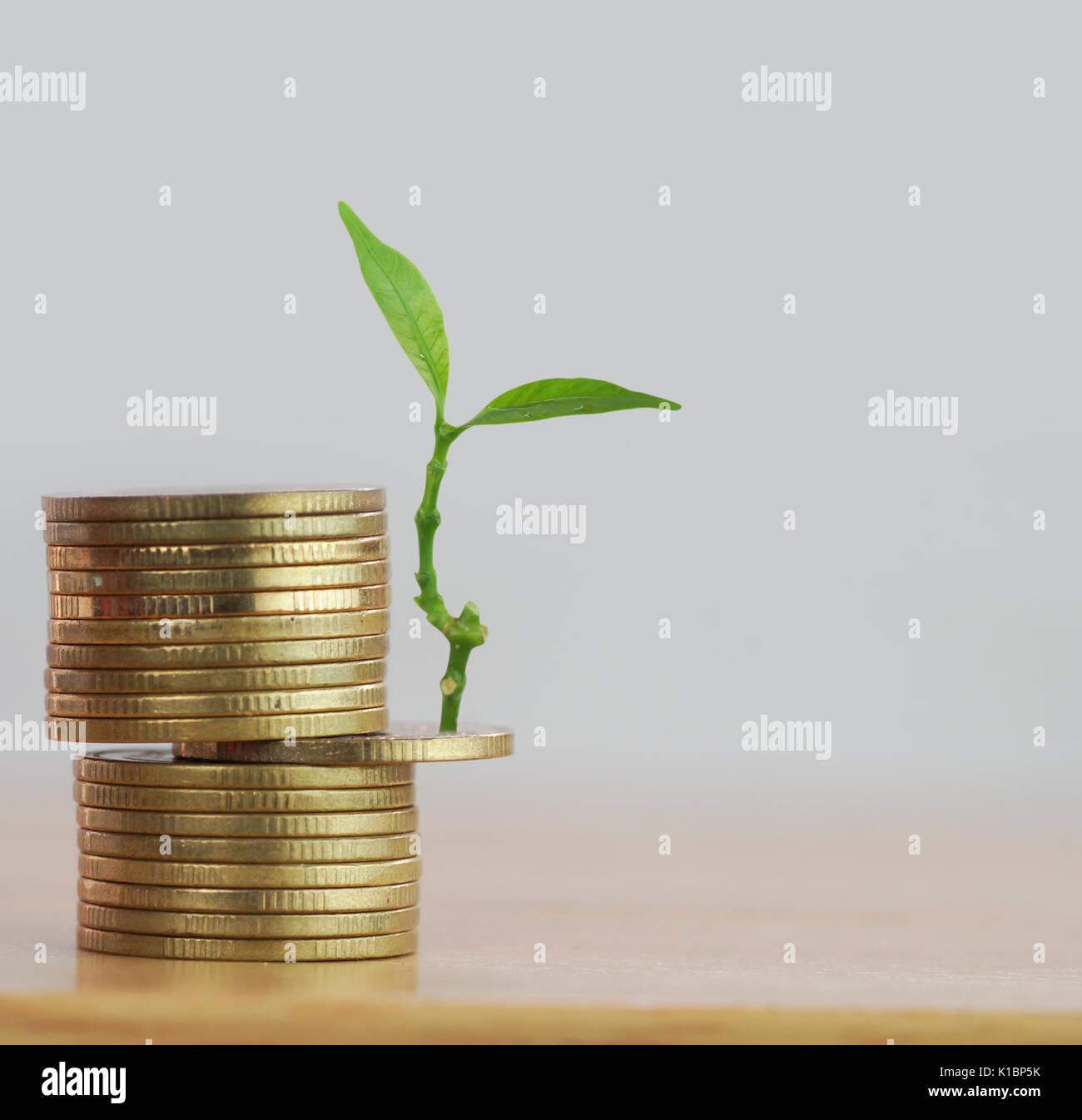Fila di monete di denaro con tree crescono, concetto nel salvare, finanza e investimenti in business Immagini Stock