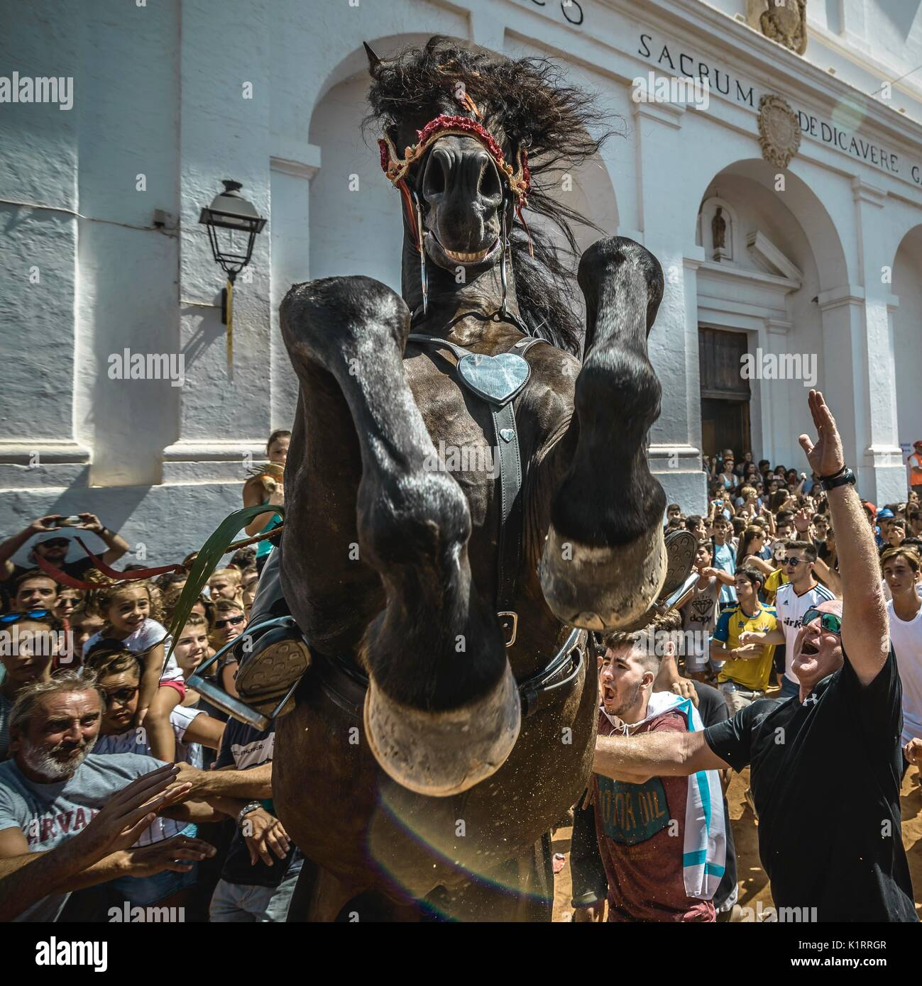 Sant Lluis, Spagna. 27 Agosto 2017: un 'caixer' (cavallo Cavaliere) alleva  fino a cavallo tra il tifo folla durante il