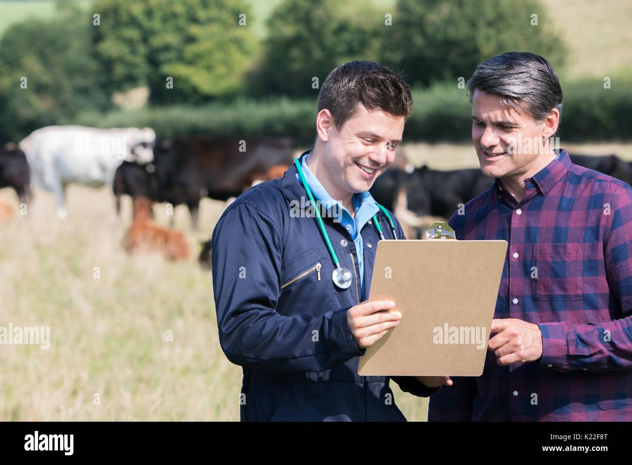 L'agricoltore e Vet nel campo con il bestiame guardando negli appunti Immagini Stock