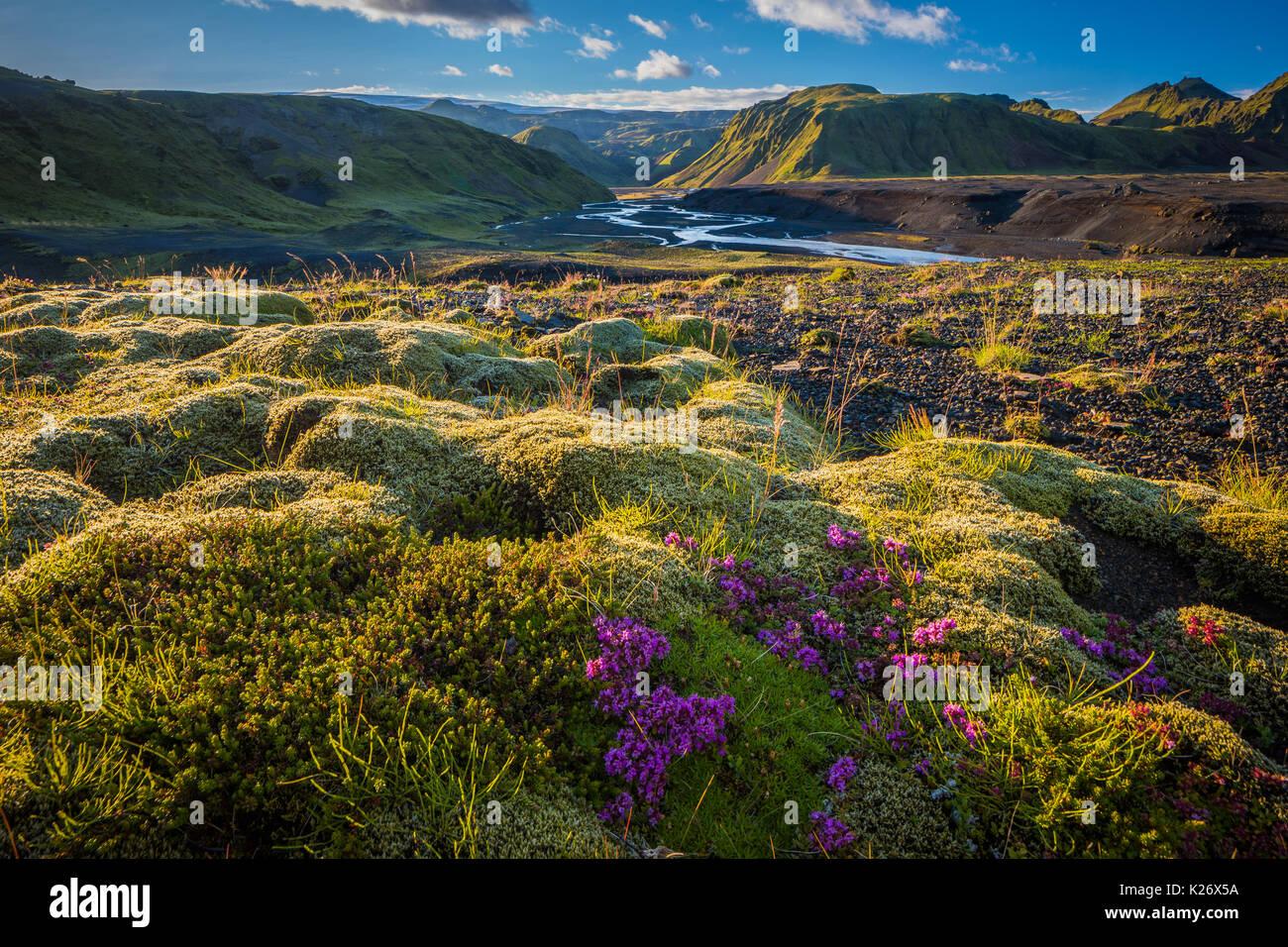 Moss e il paesaggio nella regione meridionale di Islanda Immagini Stock
