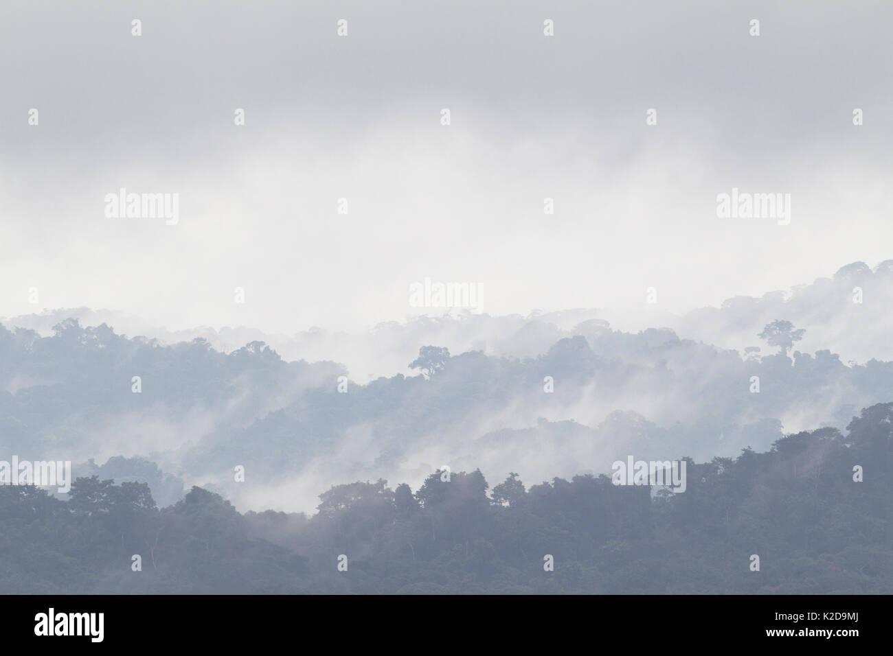 La foresta pluviale tropicale paesaggio con nebbia, Barro Colorado Island, il Lago di Gatun, sul Canale di Panama, Panama. Immagini Stock