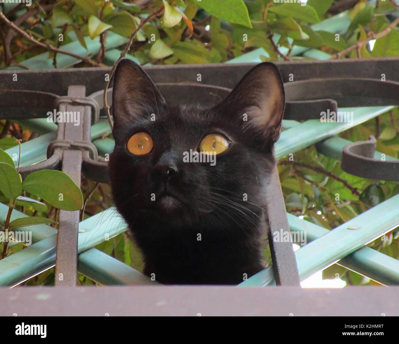 La curiosità uccise il gatto Immagini Stock