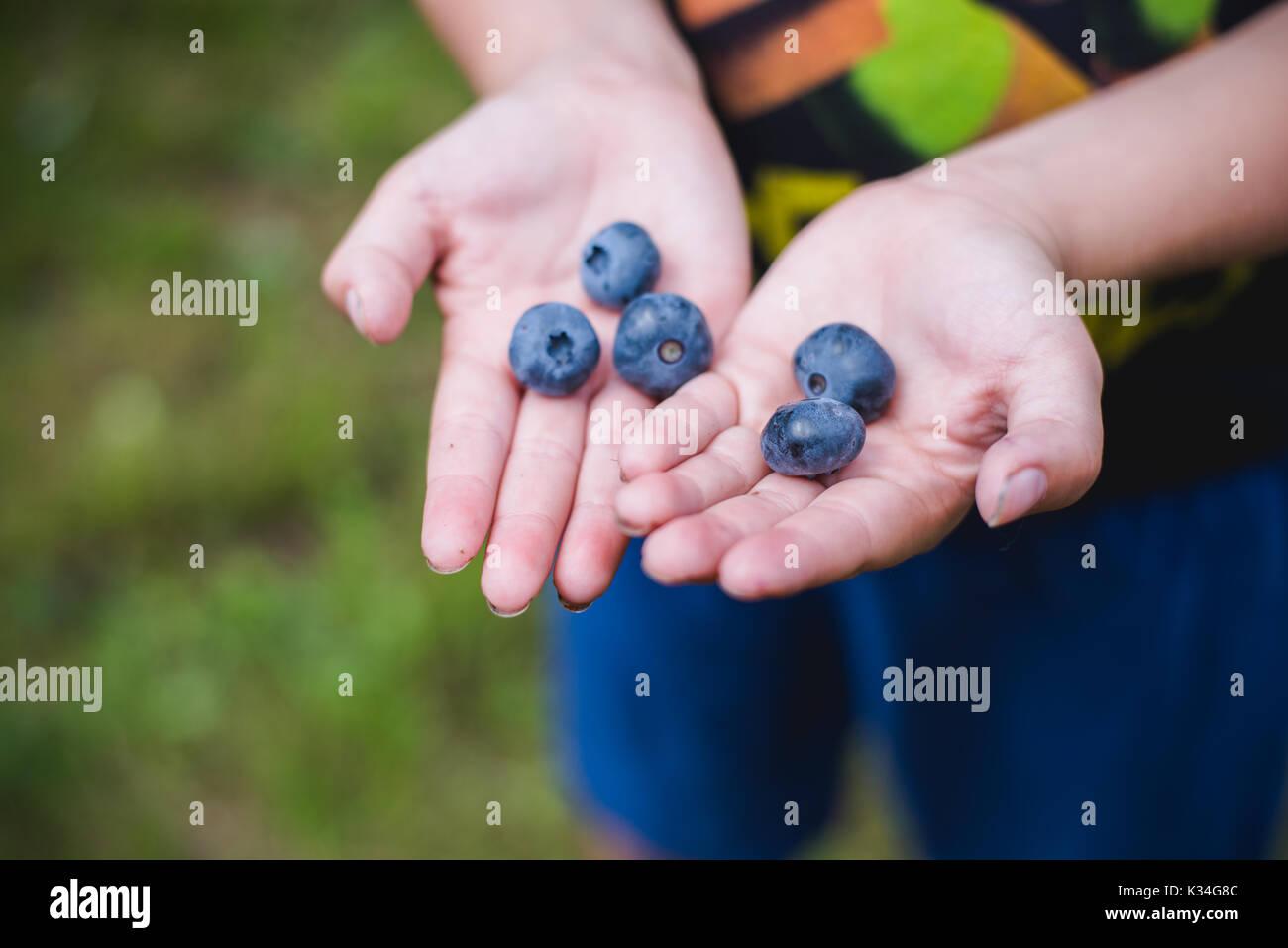 Bambino mani di mirtilli freschi da una fattoria. Immagini Stock