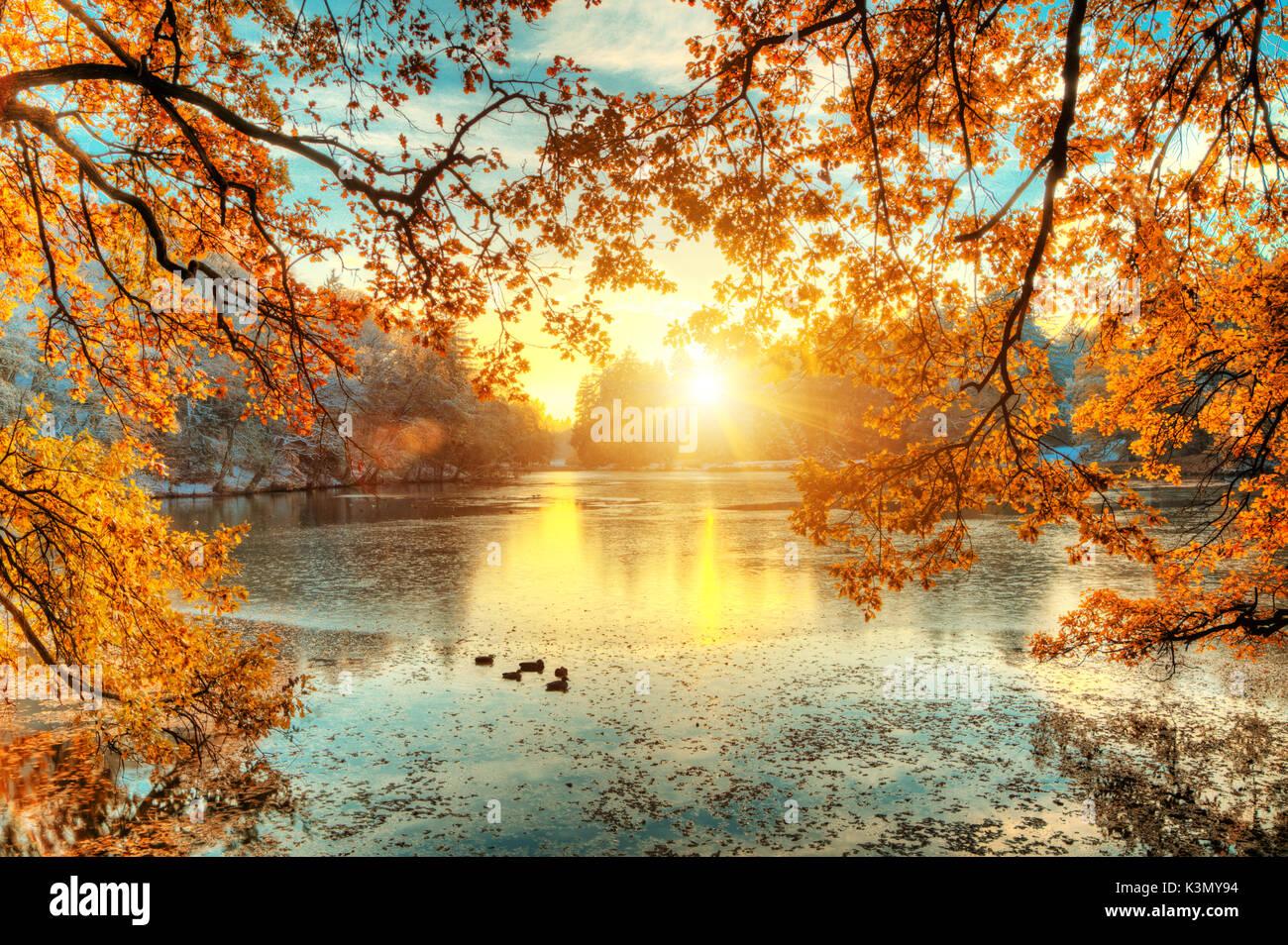 Bellissimi alberi colorati con il lago in autunno for Disegni colorati paesaggi
