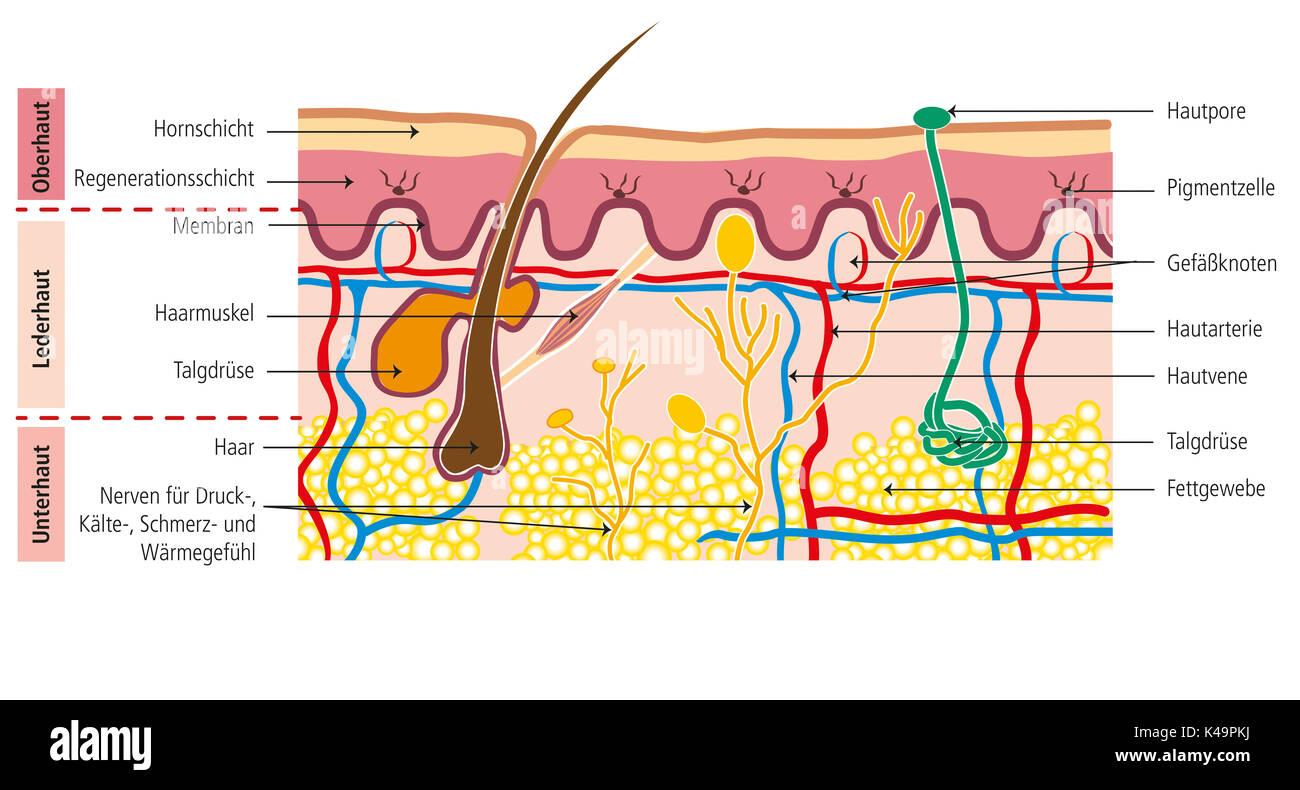 Struttura della pelle umana Immagini Stock