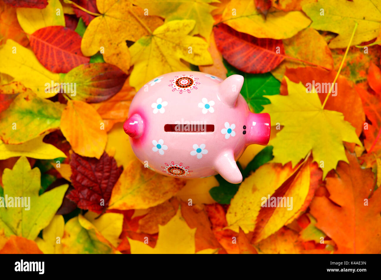 Salvadanaio e foglie di autunno, bassi tassi di interesse Immagini Stock