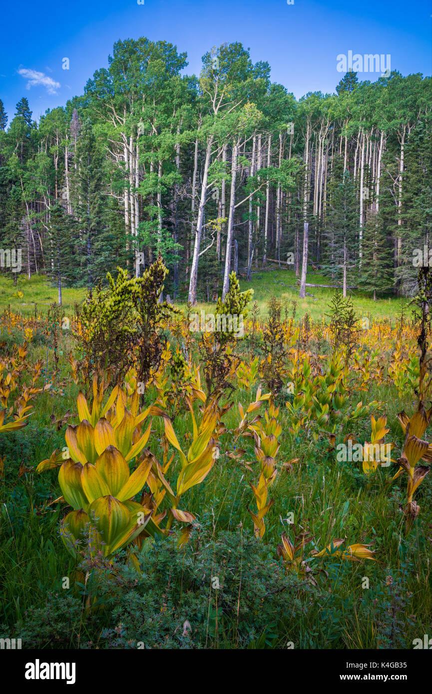 Il Pecos Wilderness è un deserto protetta l'area entro la Santa Fe National Forest e Carson National Forest. Immagini Stock