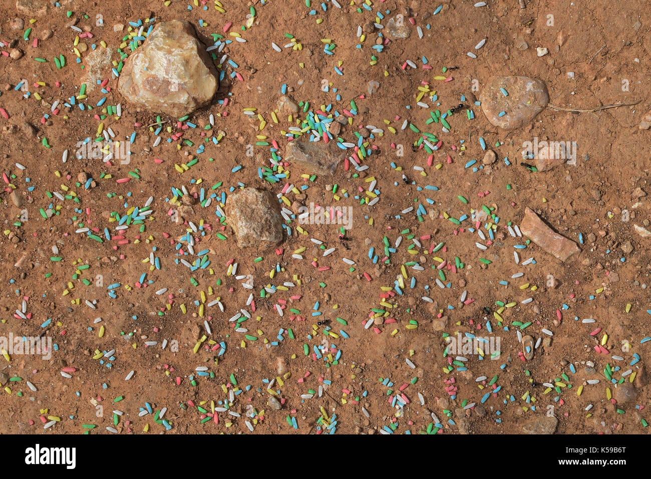 Lavoratore formiche raccolta colorato dolce spruzza. sfondo astratto. Immagini Stock