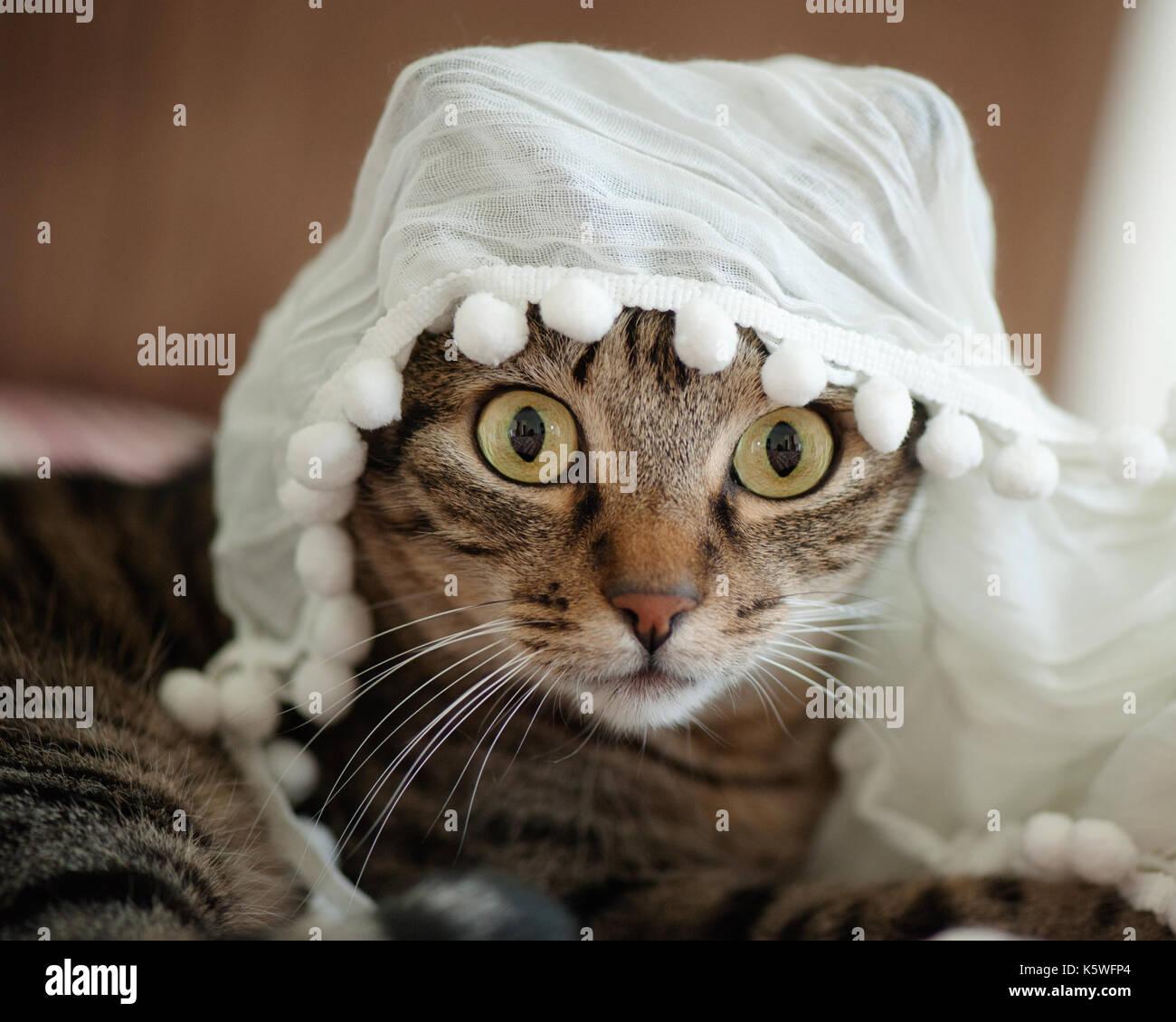 Close up tabby cat Immagini Stock