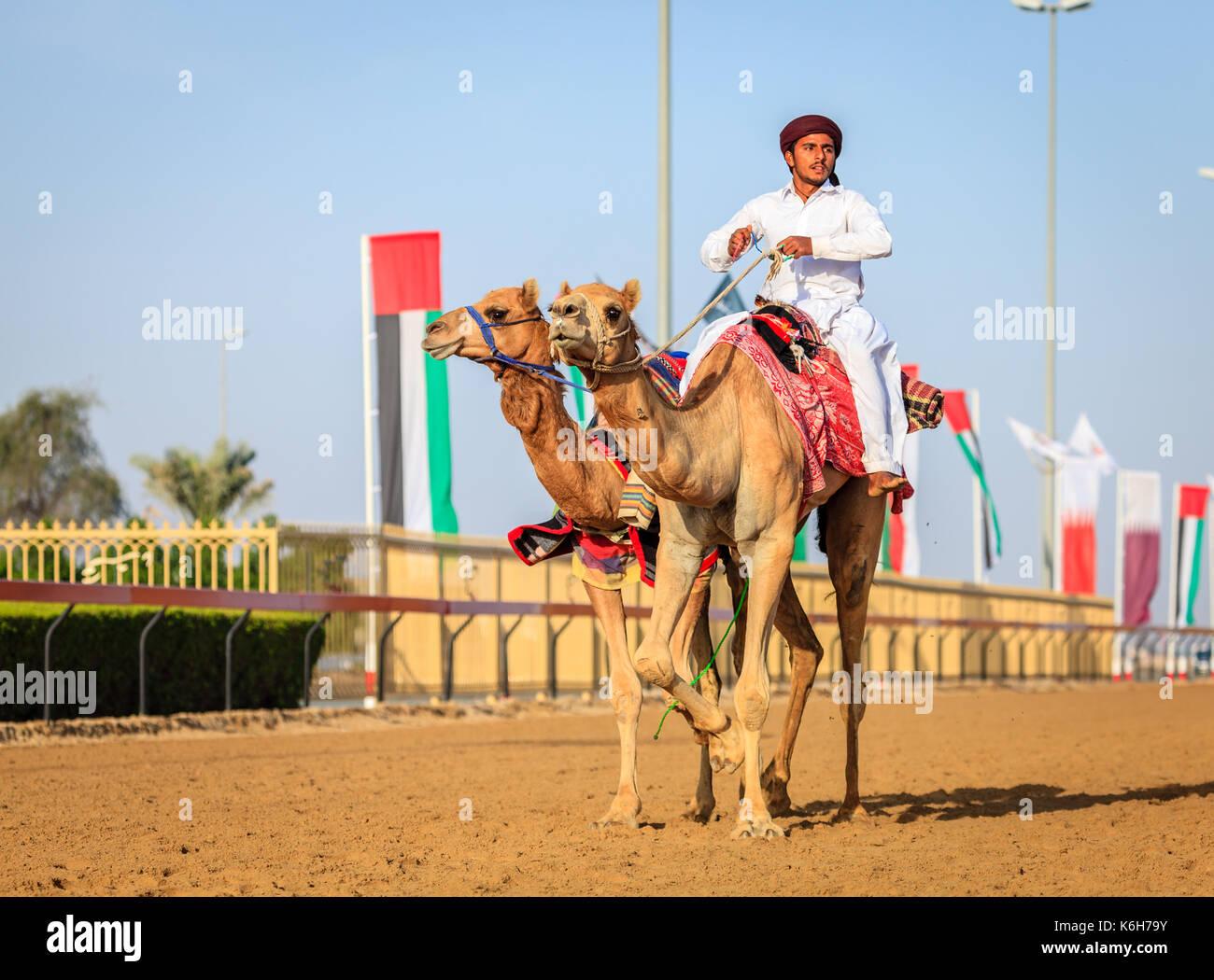 Dubai, Emirati Arabi Uniti - 25 marzo 2016: la pratica per corse di cammelli a dubai camel racing club, al marmoom, Foto Stock