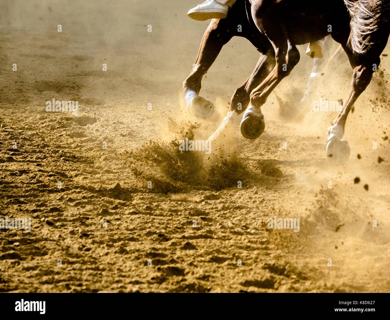 Horse Racing dettagli di cavalli al galoppo gambe su hippodrome Immagini Stock