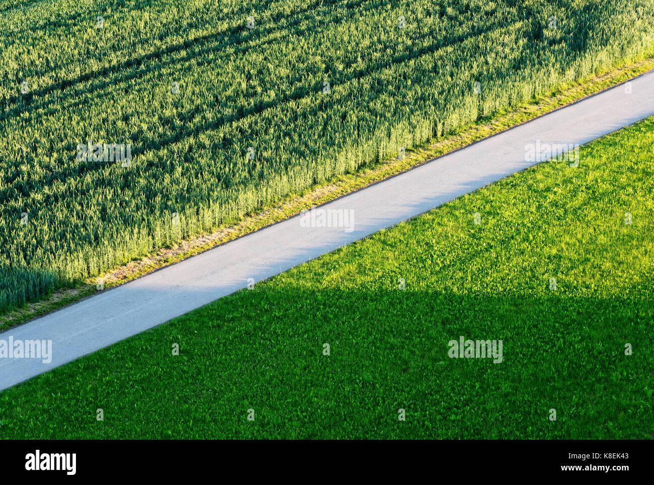 La strada attraverso il verde dei campi agricoli Immagini Stock