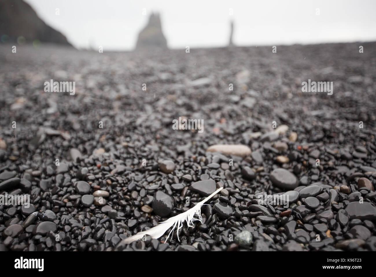 Una piuma di lone poggia su un nero sulla spiaggia di ciottoli. Immagini Stock