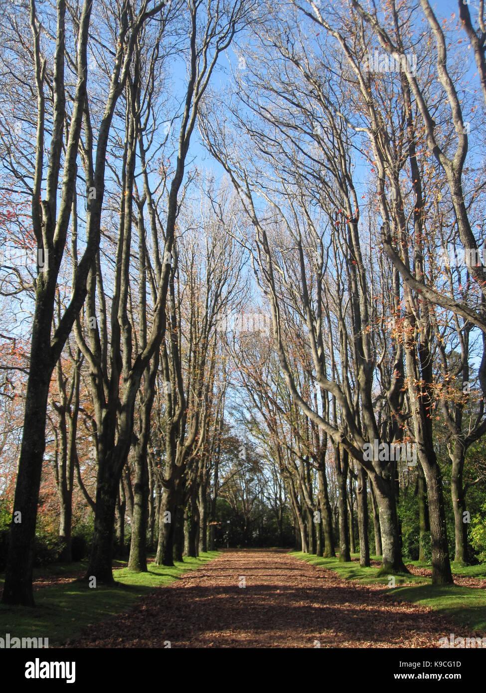 Árvores sem folhas em Jardim de serralves Immagini Stock