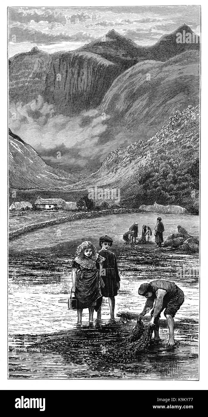 1870 I Bambini A Guardare Le Alghe Vengono Raccolti Nei Pressi Del