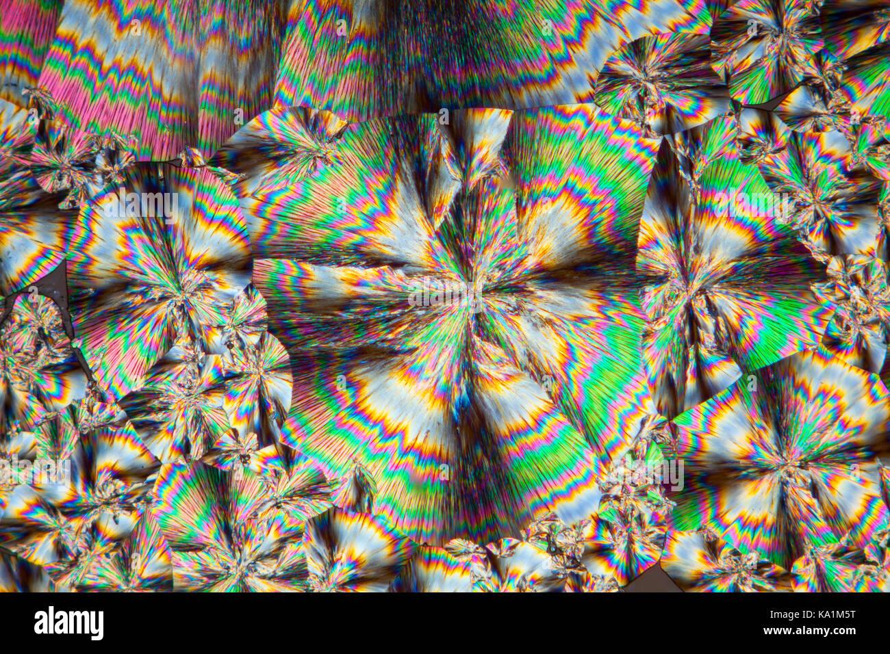 Cinconidina vetrino per microscopio fuso, cinconidina è un alcaloide trovato in China officinalis e Gongronema Immagini Stock