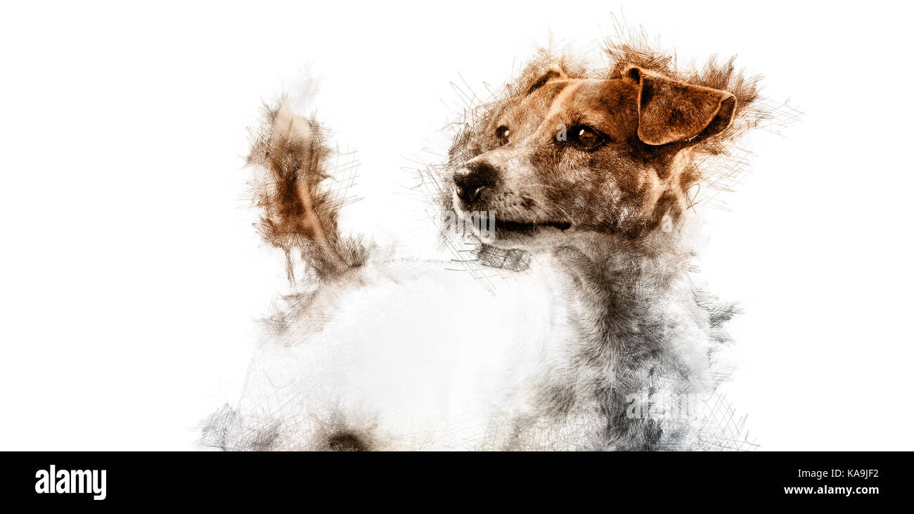 The art of jack russell immagini & the art of jack russell fotos
