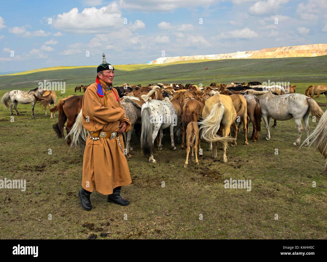 Uomo mongolo, cavallo-onorato, in abito tradizionale con mandrie di cavalli e Mongolia Immagini Stock