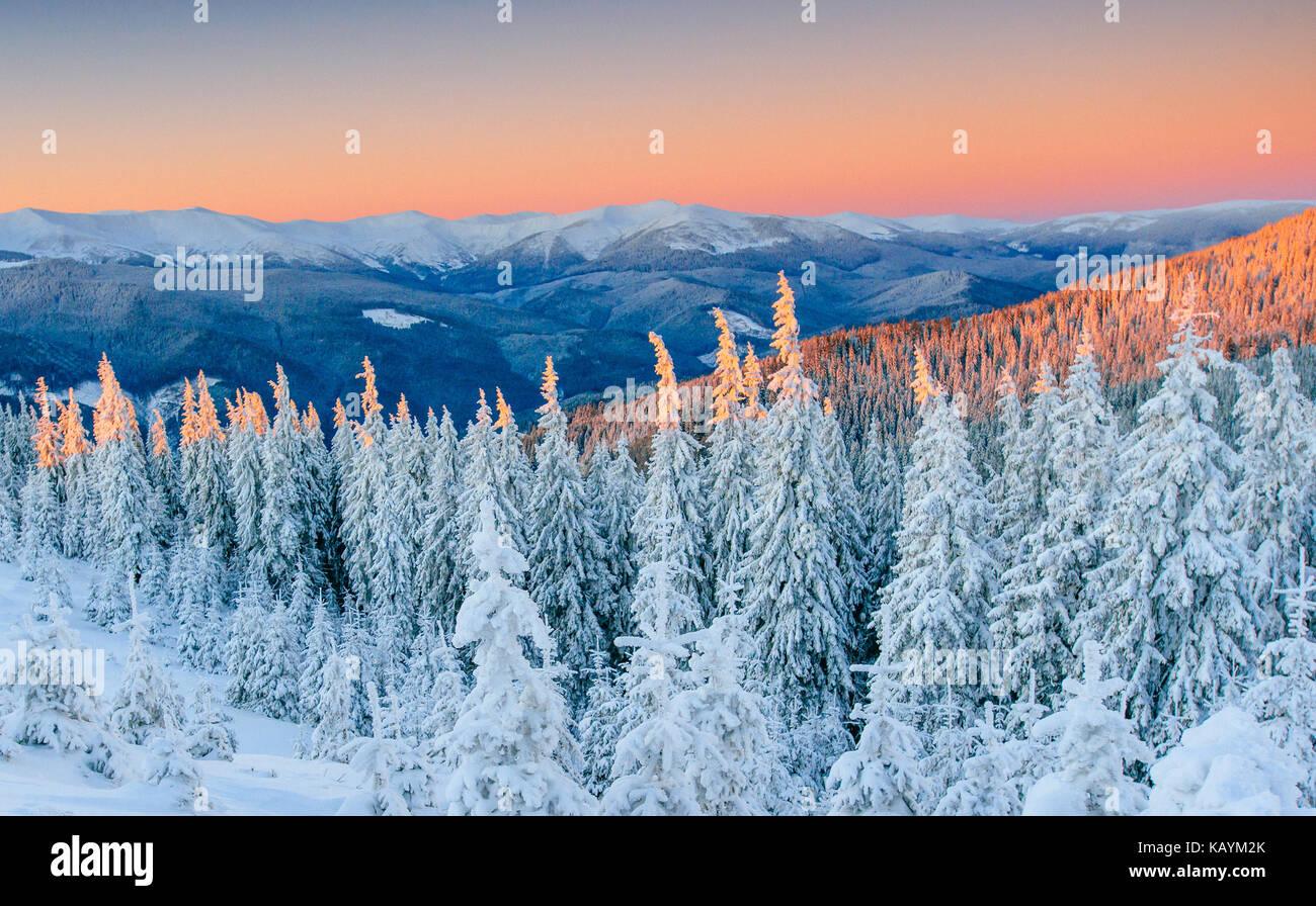 Misterioso paesaggio invernale maestose montagne in inverno. Inverno magico coperta di neve albero. Strada invernale Immagini Stock