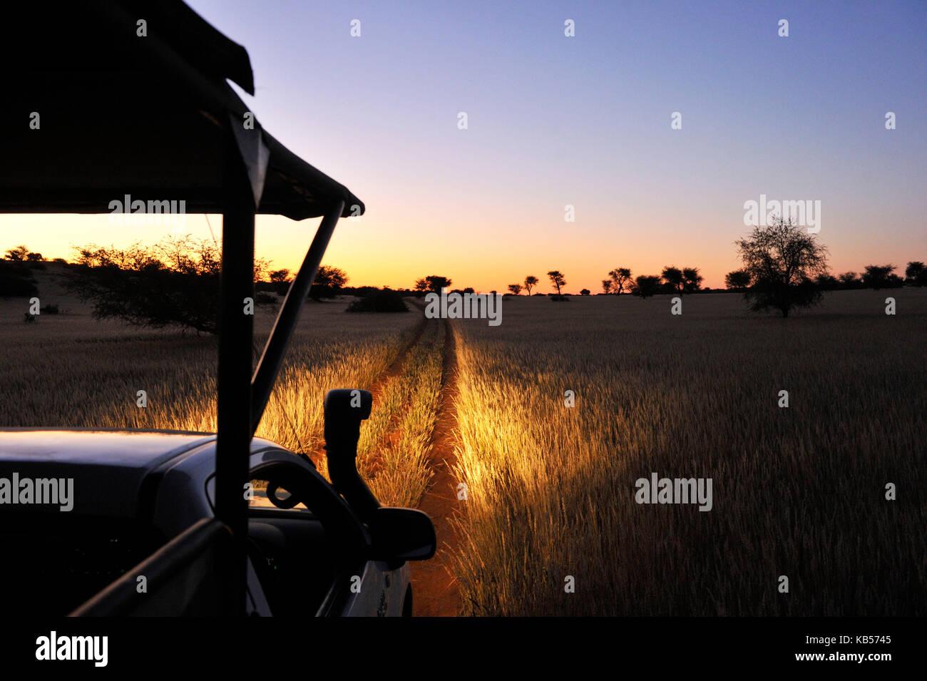 La Namibia, deserto Kalahari, intu africa Kalahari Game Reserve, safari notturno Immagini Stock